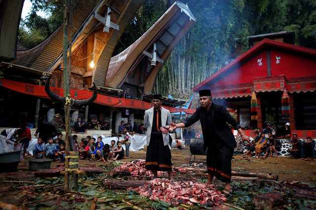 A village elder distributes freshly slaughtered pork for friends and relatives during a funeral ceremony, known as 'Rambu Solo', for a deceased man from the village near Rantepao, North Toraja, South Sulawesi, Indonesia, September 12, 2017. Credit: Reuter