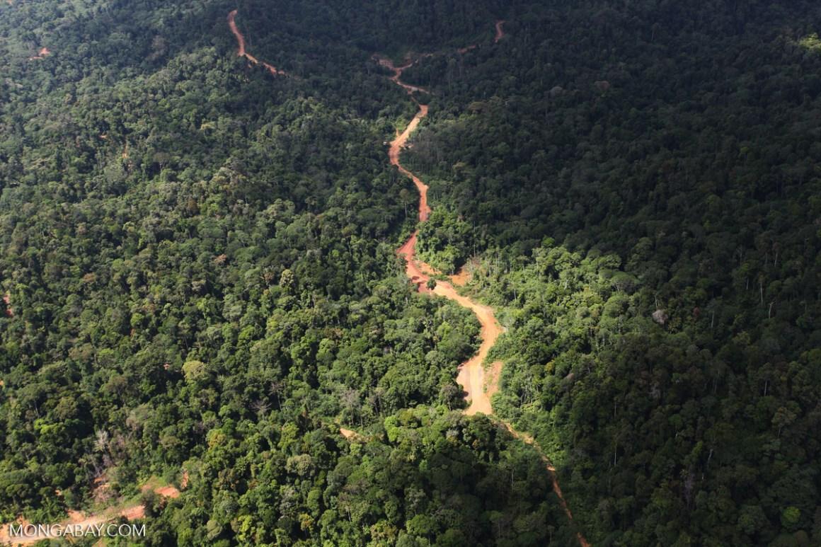 A logging road cuts through a tropical forest in Borneo. Credit: Rhett A. Butler/Mongabay