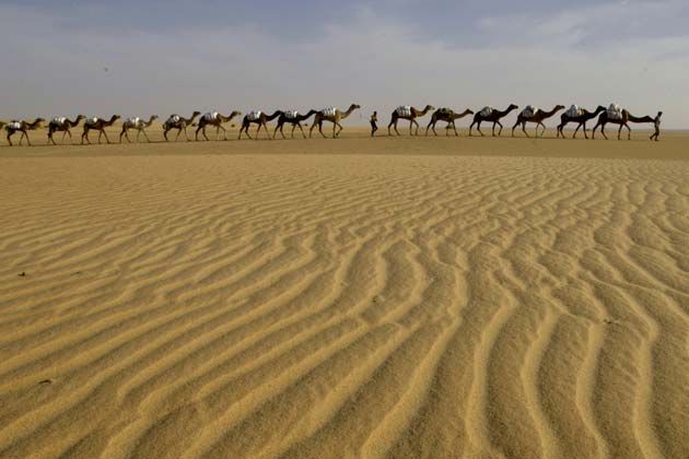 A caravan of camels loaded with sacks of raw salt travels across the desert near Tichit, Mauritania December 5, 2006. Credit: Reuters/David Rouge