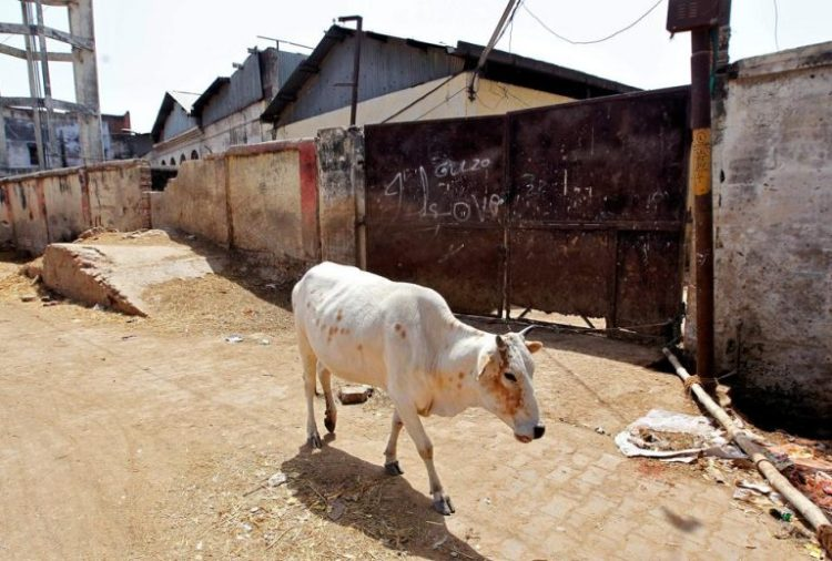 in-cow-walks-past-allahabad-closed-slaughterhouse_36609f40-143c-11e7-a5d6-c47fceabb9c0