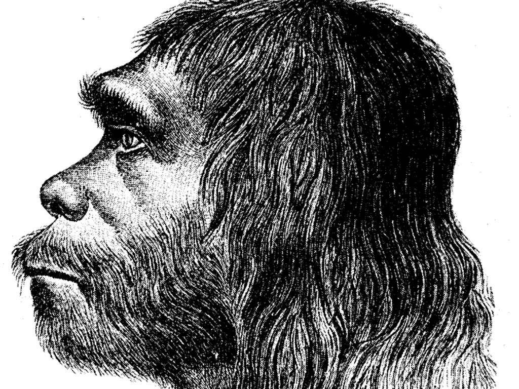 Neanderthal Man Public Domain