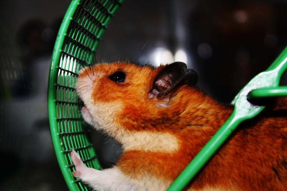 Strategies To Escape The Manic Hamster Wheel Of Life