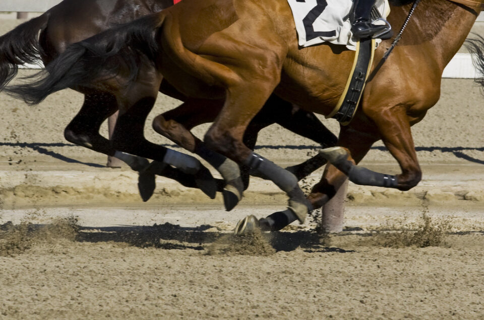 Thoroughbred horse racing. This image is a low angle view of two thoroughbred brown horses racing on a track covered in sand. The horses are racing alongside a white fence. The horse in the front has a black two on it. In front of the two horses in the picture there is a tail of the horse in front.