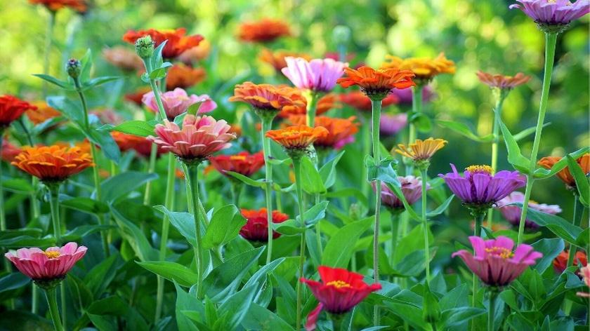 Growing Native Pollinator Friendly plants