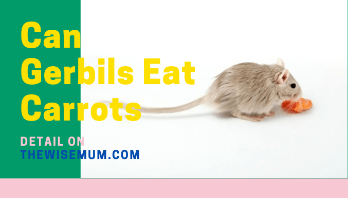 Can Gerbils Eat Carrots