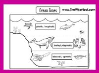 Ocean Zones to Label and Color - The Wise Nest
