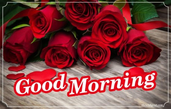 best-lovely-good-morning-text-with-fresh-red-rose-flowers-wallpapers-wishing-e-cards-pictures-Images-pics-photos-for-love-free-download
