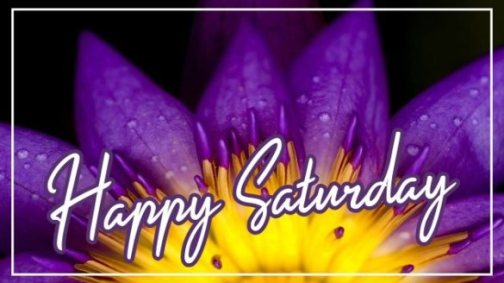 happy-saturday-beautiful-flowers-wallpaper-images-wishes-greetings-pictures-hd-free-download