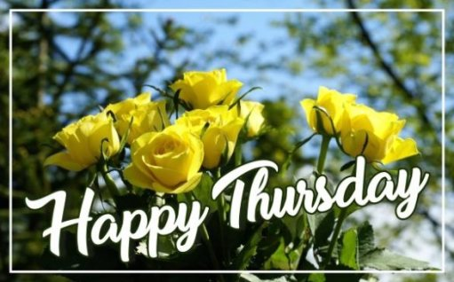 happy-thursday-yellow-rose-flowers-wallpapers-greetings-images-pictures-free-download