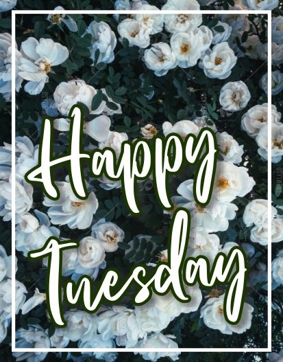 happy-tuesday-images-wishes-greetings-wallpaper-pictures-wishing-free-download
