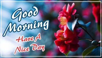 best-good-morning-have-a-nice-day-red-flower-images-pictures-wishing-greetings-wallpapers-for-friends-free-download