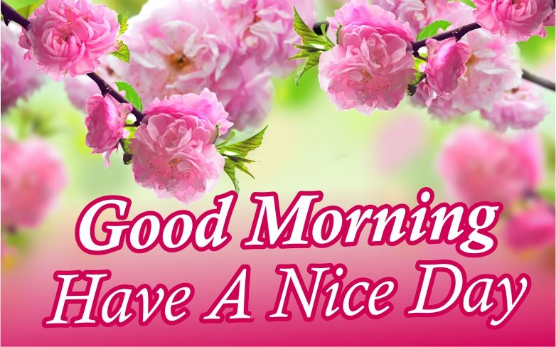 special-good-morning-have-a-nice-day-with-beautiful-pink-flowers-images-wallpaper-wishing-pics-greeting-cards-pictures-for-friends