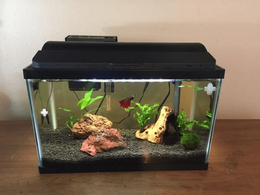 10 gallon betta tank with rose betta and plants