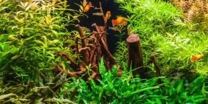 fast growing plants in aquarium