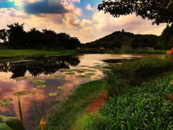 Warm shallow pond representing a betta fish's natural habitat