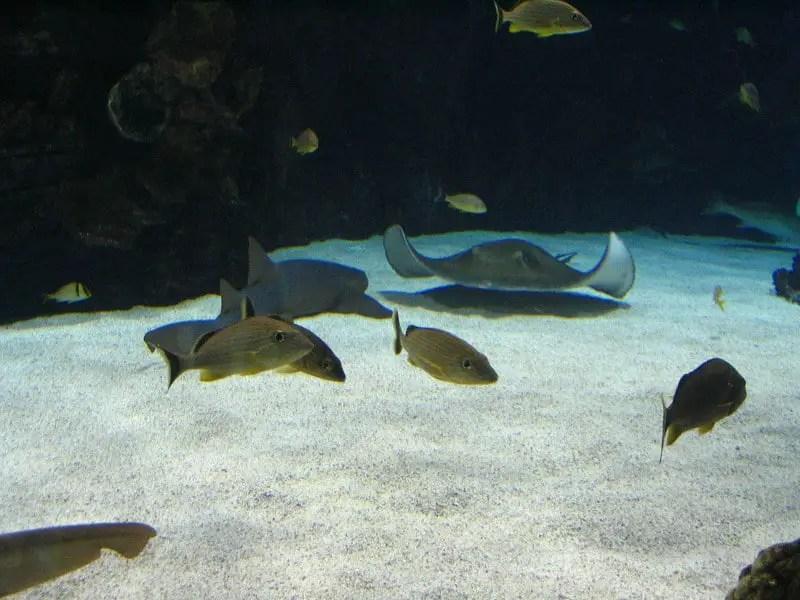 Fish swimming in aquarium at newport aquarium in Kentucky