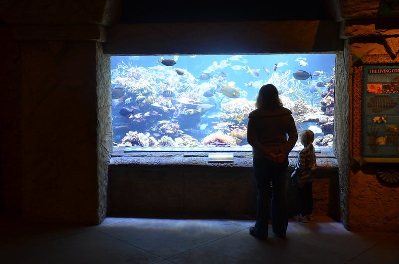mother and child standing in front of tropical aquarium
