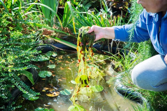woman holding pond weeds over dirty pond