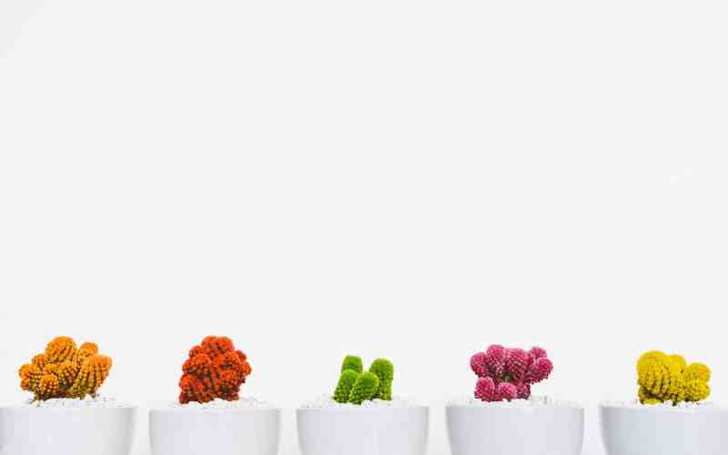 Fun new ways to add plants to your life