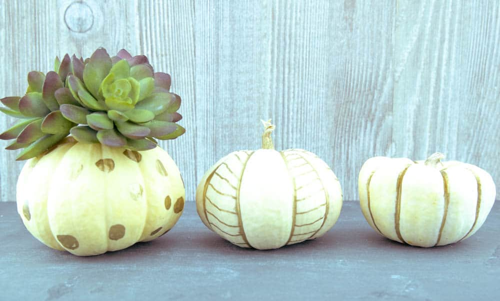 white pumpkins with various gold designs