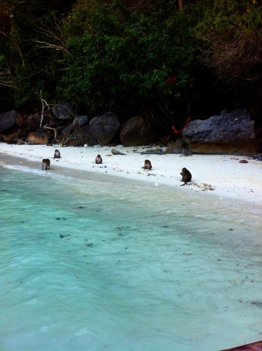Monkeys on the Beach Thailand