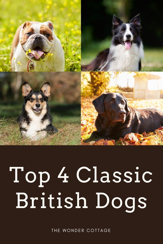 top 4 classic British dogs