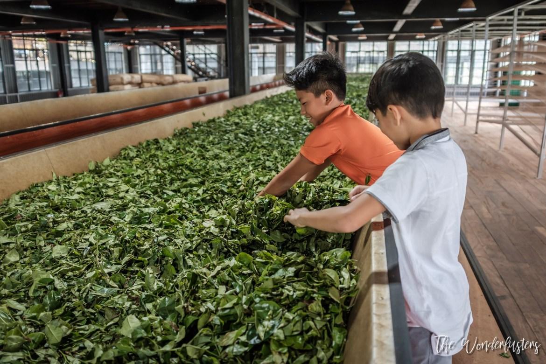 Oak Ray Tea Factory