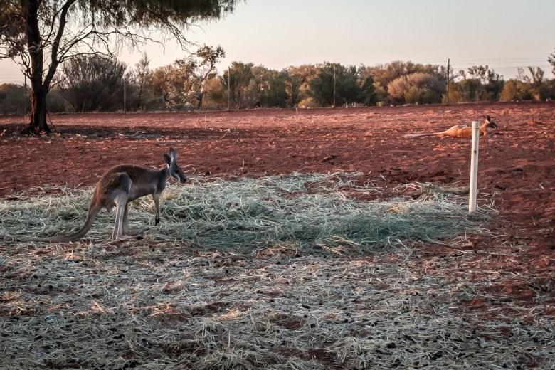 Australia Alice Springs 04