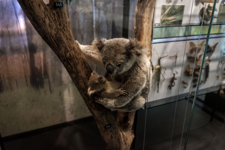 Australia Brisbane 44