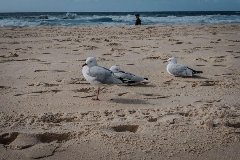 Australia Sydney 088