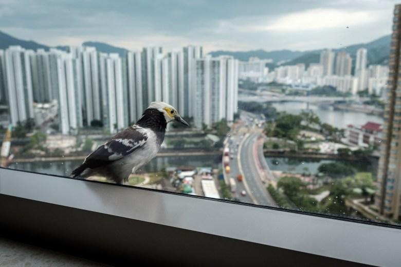 Hong Kong Kowloon 048