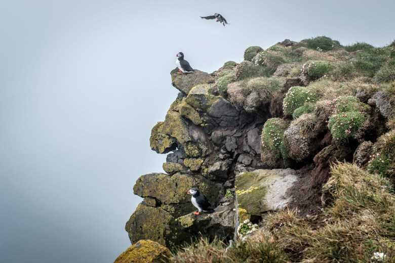 Iceland Westfjords 04