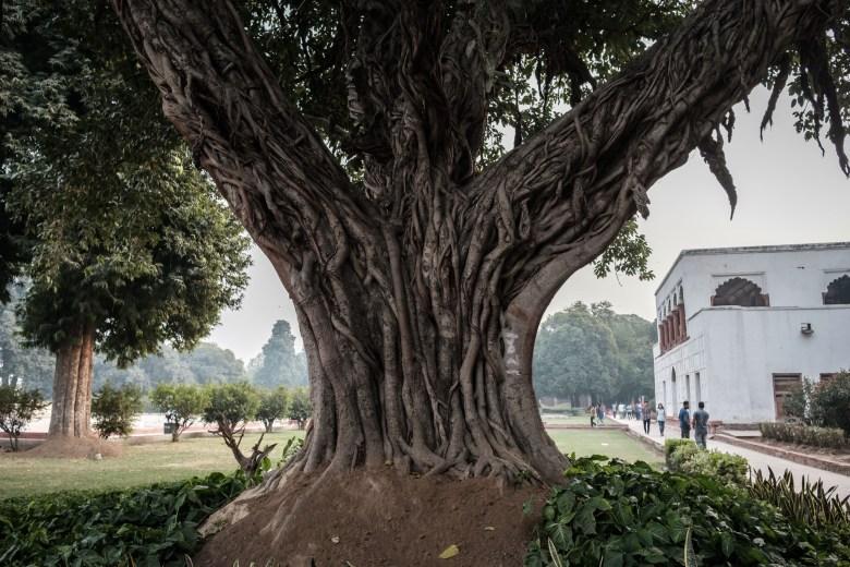 India Delhi 55