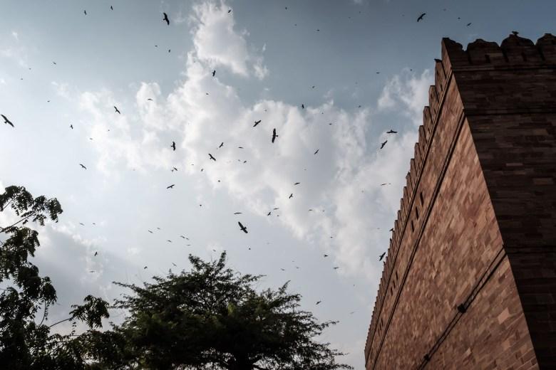 India Jodhpur 30