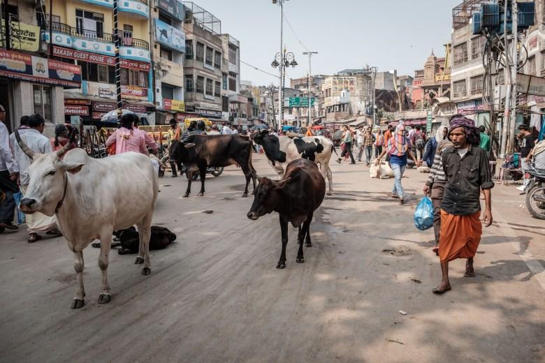 India Varanasi 061