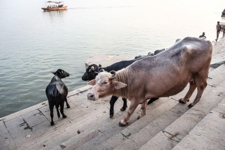 India Varanasi 069