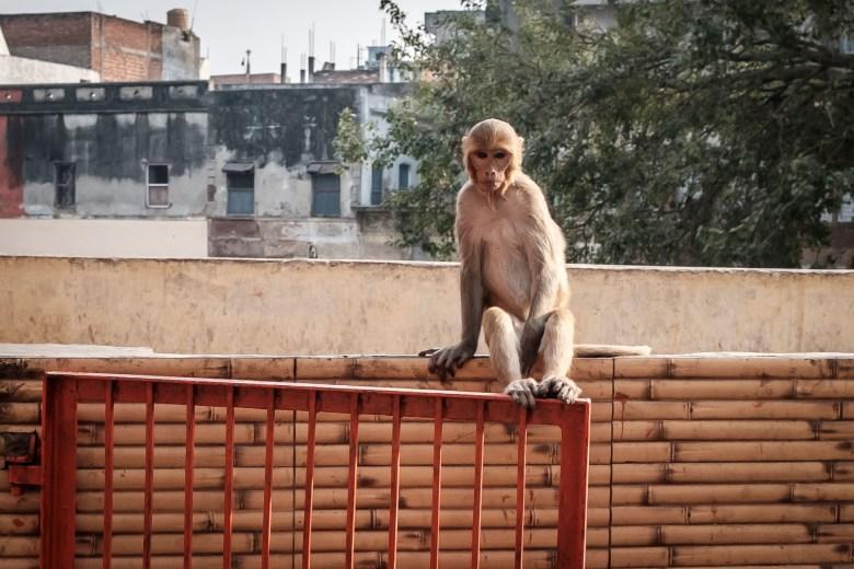 India Varanasi 108