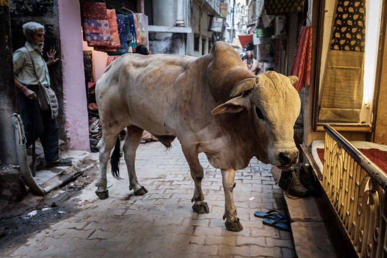 India Varanasi 112