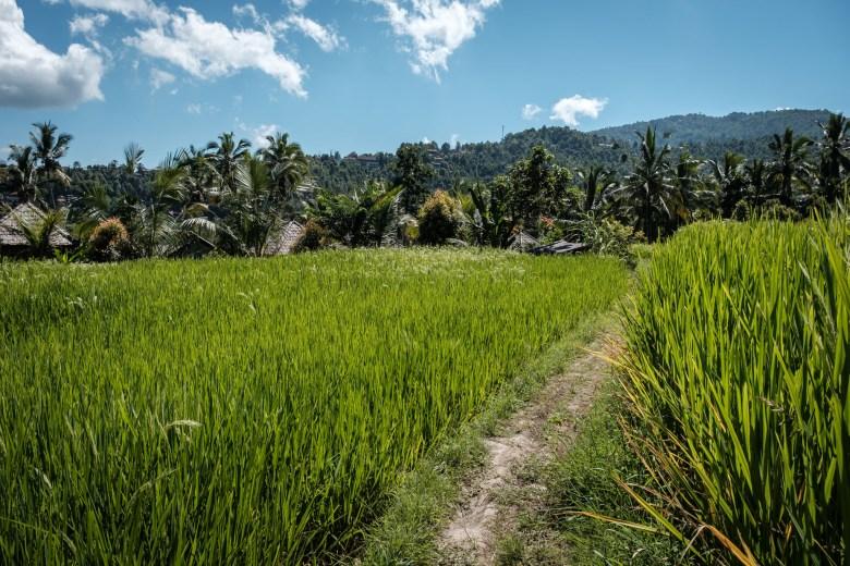 Indonesia Munduk 065