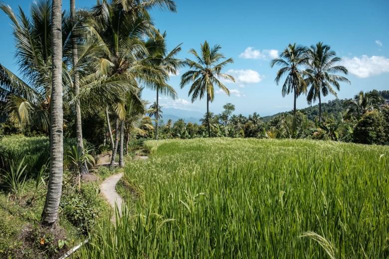 Indonesia Munduk 074