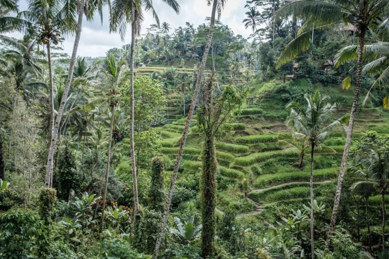 Indonesia Tirta Empul 11