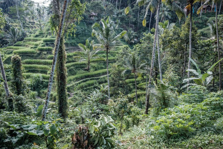 Indonesia Tirta Empul 15