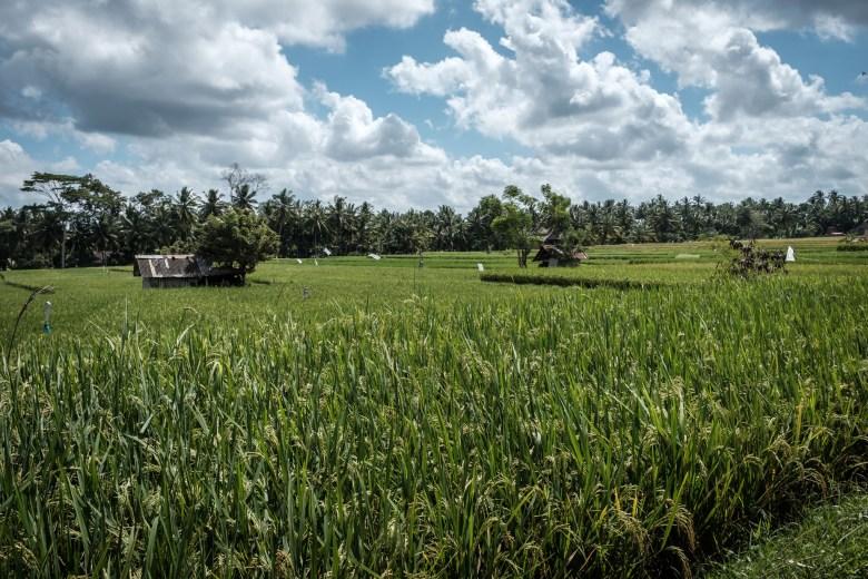 Indonesia Ubud 038