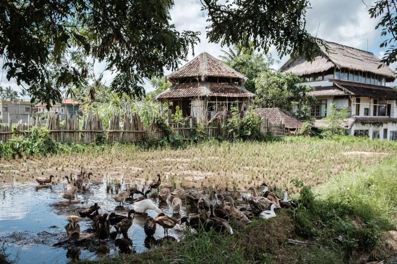 Indonesia Ubud 041