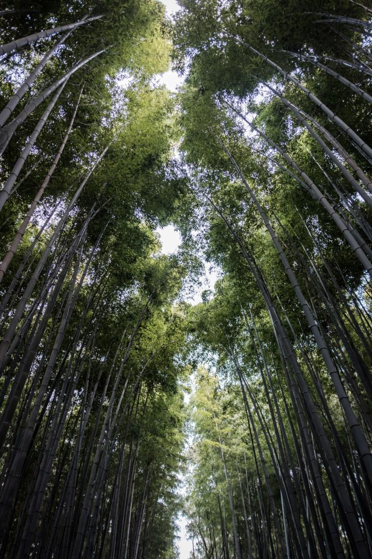 Japan Kyoto 109