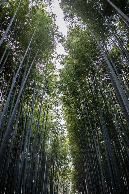 Japan Kyoto 113
