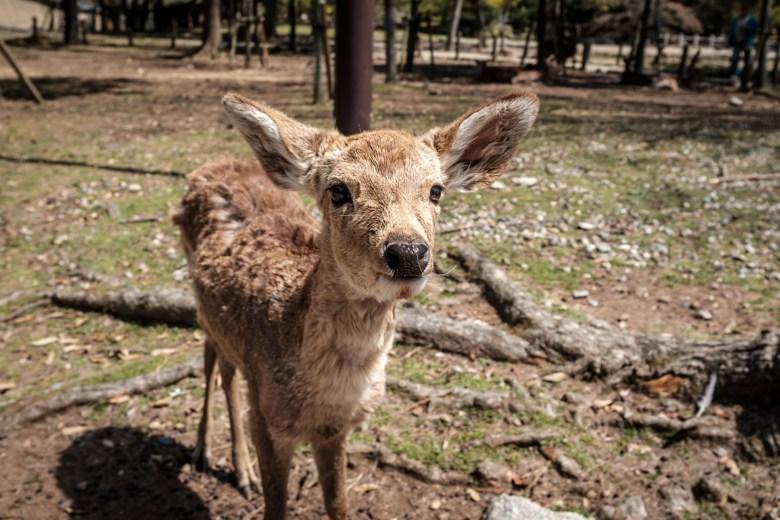 Japan Nara 08
