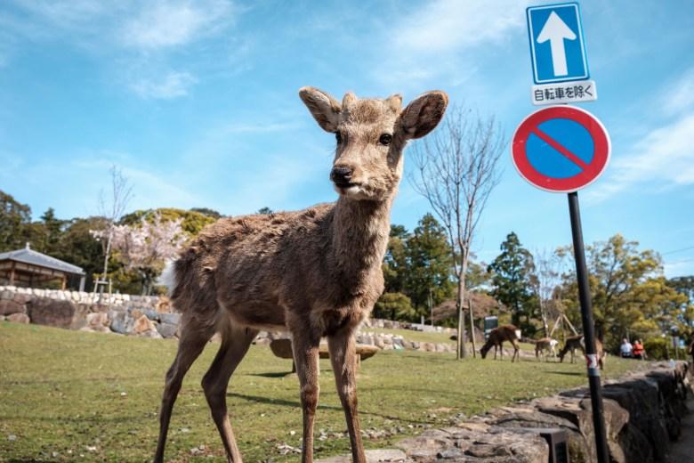 Japan Nara 31