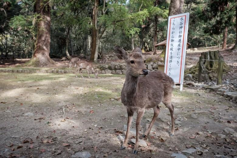 Japan Nara 32