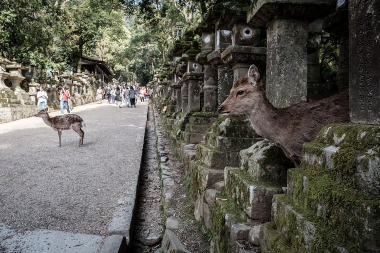 Japan Nara 44